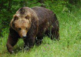 Μέτρα προφύλαξης από άγρια ζώα