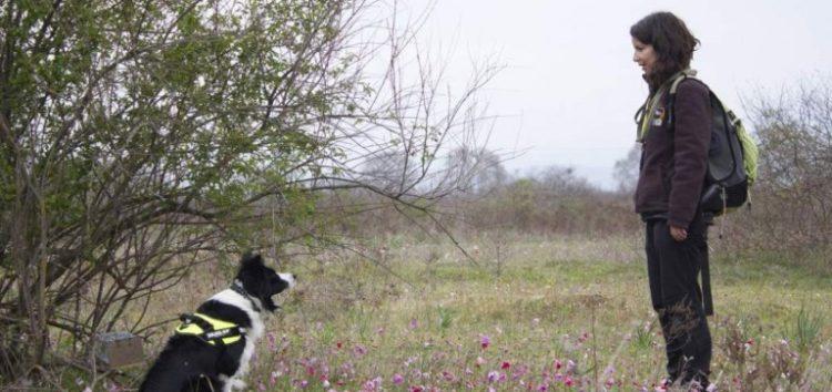 Νεκρά από φόλα τρία σκυλιά φύλαξης κοπαδιών στη Φλώρινα