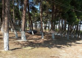 Συνεργασία του δήμου Αμυνταίου με τη Διεύθυνση Δασών και καθαρισμός στα Πευκάκια