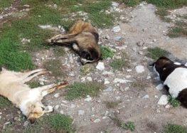 Μαζική δηλητηρίαση σκύλων σε Σκλήθρο, Αετό και Νυμφαίο