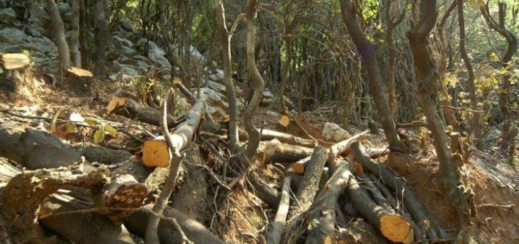 Σύλληψη τριών αλλοδαπών για παράνομη υλοτομία σε δασική περιοχή της Φλώρινας