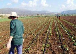 Ο Αγροτικός Σύλλογος Αμυνταίου για τη Διεθνή Ημέρα Αγρότισσας