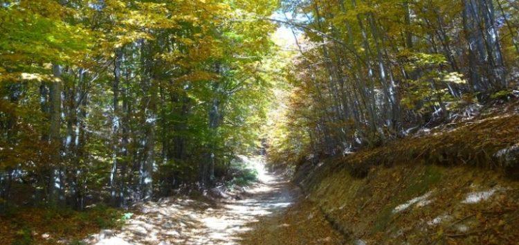 Κοινή πορεία στην διαδρομή Δροσοπηγή – Νυμφαίο από τους Φ.Ο.Ο. Φλώρινας και Κουφαλίων