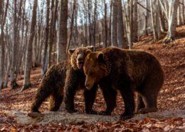Οι αρκούδες στο Καταφύγιο του «Αρκτούρου» ξύπνησαν και σας περιμένουν (video, pics)