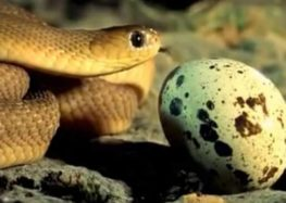 Το αυγό του φιδιού