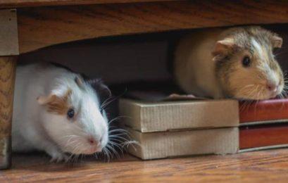 Οι ποντικοί (της βροχής)