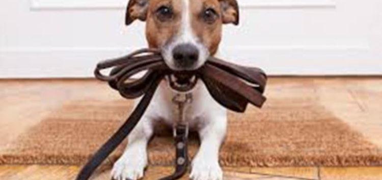 Βγάζοντας τον σκύλο βόλτα: Ποιός είναι ο σωστός τρόπος και γιατί είναι τόσο σημαντικό