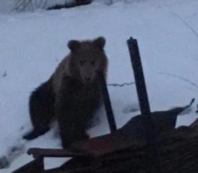 Εμφάνιση αρκούδας στην περιοχή του Αγίου Γεωργίου (video, pic)