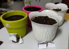 Σύλληψη δύο ατόμων σε περιοχή της Φλώρινας για κατοχή ναρκωτικών ουσιών (pics)