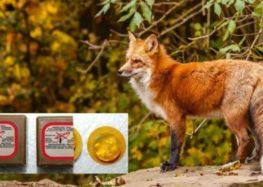 Εαρινό πρόγραμμα εναερίων ρίψεων εμβολίων – δολωμάτων κατά της λύσσας, στην ΠΕ Φλώρινας, για τον εμβολιασμό της άγριας πανίδας (κυρίως των κόκκινων αλεπούδων)