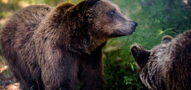 Ανοίγουν και πάλι για τους επισκέπτες τα Καταφύγια του Αρκτούρου