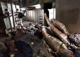 Μεγάλες ποσότητες ναρκωτικών ουσιών καταστράφηκαν σε υψικάμινο στο εργοστάσιο του ΑΗΣ Μελίτης με μέριμνα του Τμήματος Ασφαλείας Φλώρινας (video)