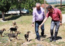 Στειρώσεις αδέσποτων ζώων στον δήμο Αμυνταίου (pics)