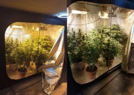 Συνελήφθησαν δύο άτομα σε περιοχή της Φλώρινας για καλλιέργεια και κατοχή ναρκωτικών ουσιών (video, pics)