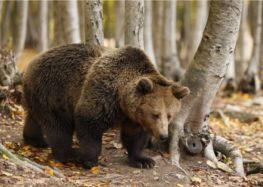 Συνάντηση εργασίας με θέμα: «Άνθρωπος και αρκούδα, στρατηγική για μια αρμονική συνύπαρξη»