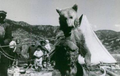 Μπήκε στο χωριό ο αρκουδιάρης