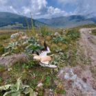 Κοινό Δελτίο Τύπου περιβαλλοντικών οργανώσεων: Τρεις πελεκάνοι νεκροί μετά από πρόσκρουση σε ανεμογεννήτριες στον Βαρνούντα