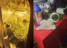 Συνελήφθη 32χρονος στη Φλώρινα για καλλιέργεια δενδρυλλίων κάνναβης (video, pics)