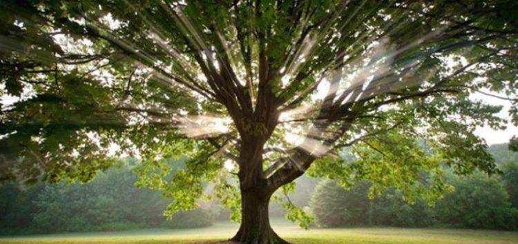 Το Δέντρο (της αθανασίας)