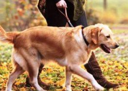 Ανακοίνωση του Δήμου Φλώρινας προς τους ιδιοκτήτες δεσποζόμενων ζώων
