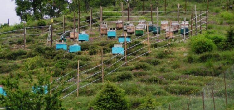 Κλάπηκε κιτ ηλεκτροφόρας περίφραξης μελισσοκόμου στην Κέλλη