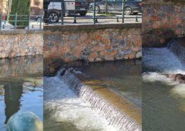 Ένα αγριογούρουνο κάνει βόλτες μέσα στο ποτάμι της Φλώρινας (pics)