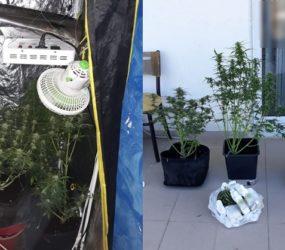 Συνελήφθη 33χρονος στη Φλώρινα για καλλιέργεια δενδρυλλίων κάνναβης (pics)