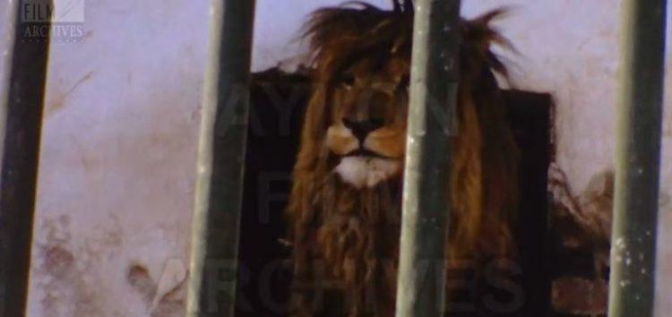 Ο Ζωολογικός Κήπος της Φλώρινας το 1973 (video)