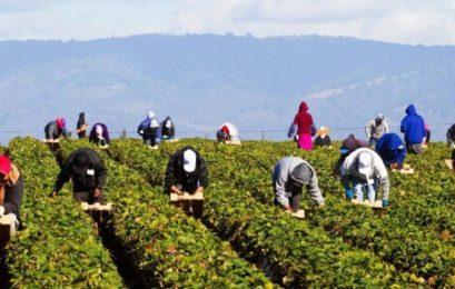 Πρόβλημα με την είσοδο των εργατών στον πρωτογενή τομέα από όμορες τρίτες χώρες