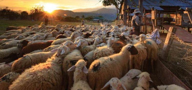 Εκπαιδευτικό σεμινάριο για την κτηνοτροφία