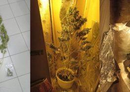 Συνελήφθησαν τρία άτομα σε περιοχές της Φλώρινας, για καλλιέργεια δενδρυλλίων κάνναβης και κατοχή ναρκωτικών ουσιών, σε τρεις διαφορετικές περιπτώσεις (pics)